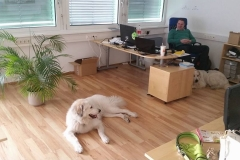 Im Büro dabei
